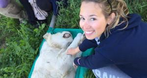 volontariato curare animali