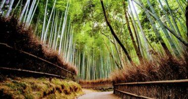 TREE TUNNEL – 5 SUGGESTIVE GALLERIE ARBOREE