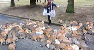 Ōkunoshima isola dei conigli giappone