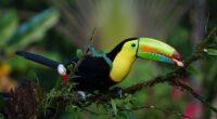 Informazioni e consigli utili per trasferirsi a vivere in Costa Rica