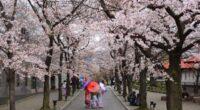 SAKURA Quando arriva la Primavera il Giappone